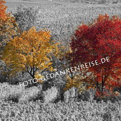 Bäume Colourkey Pfalz