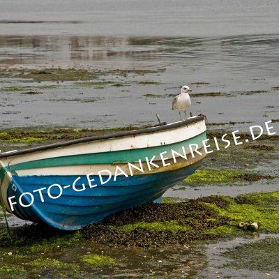 Boot mit Möwe bei Ebbe