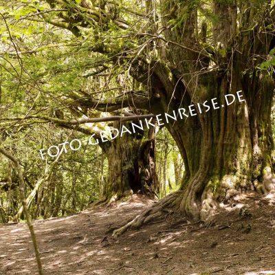 El bosque de Tejedelo Eibe Requejo de Sanabria