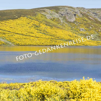 Ginsterlandschaft Lago de Sanabria