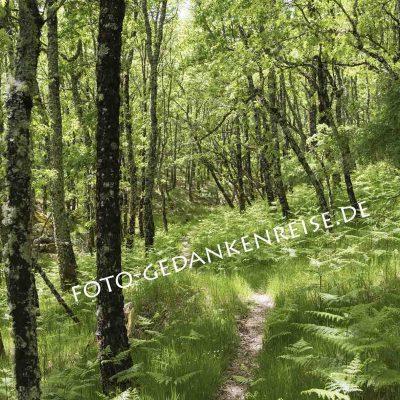 Waldweg durch Eichenwald und Farn