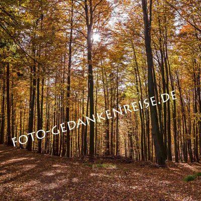 Waldweg im Herbst Pfälzer Wald Pfalz