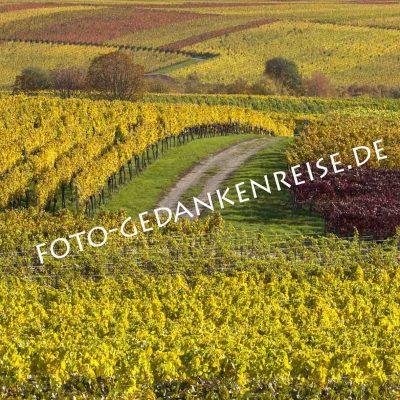 Weg in bunten Weinbergen Pfalz