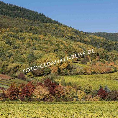 Wein Berge und Rietburg Pfalz