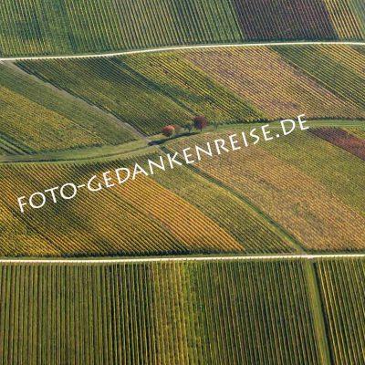 Weinberg aus der Luft mit Baumgruppe Pfalz