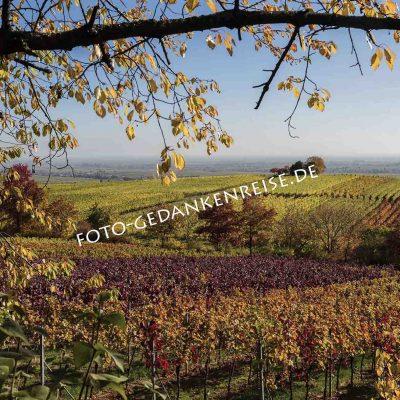 Weinberg mit Astrahmen Pfalz