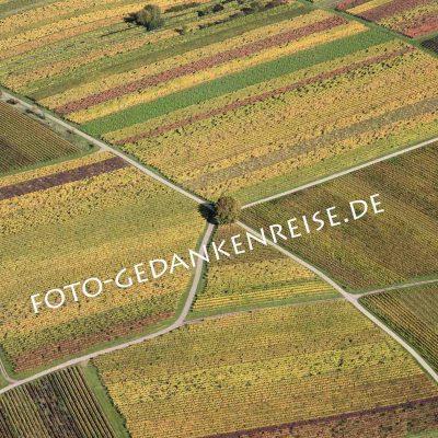 Weinberge aus der Luft mit Wegekreuz Pfalz