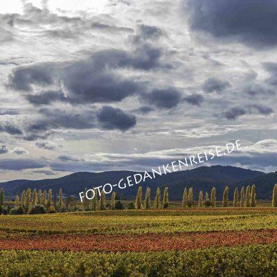 Weinberge mit Herbststimmung Pfalz